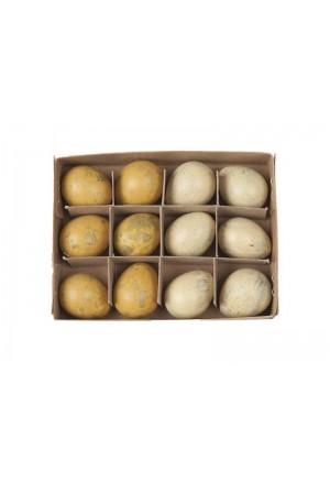 Αυγά ορτυκιού κίτρινο μιξ (Σετ/12)